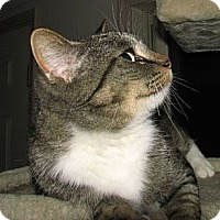 Adopt A Pet :: Sparkles - Norwich, NY
