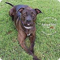 Adopt A Pet :: Colt - Gilbert, AZ