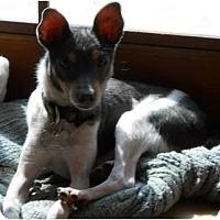 Adopt A Pet :: Noddles - Oklahoma City, OK