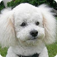 Adopt A Pet :: Ronnie - La Costa, CA