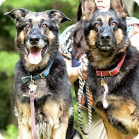 Adopt A Pet :: Maggie and Jolene - Wayland, MA