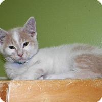 Adopt A Pet :: Romeo - Dover, OH