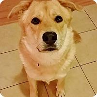 Adopt A Pet :: Izzy - Brooklyn, NY
