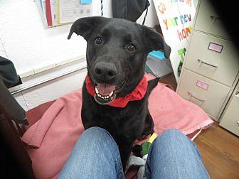 Labrador Retriever Mix Dog for adoption in Lake Odessa, Michigan - Jazzie