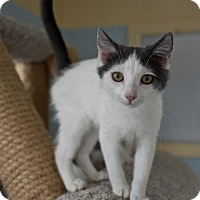 Adopt A Pet :: Chevy - East Norriton, PA