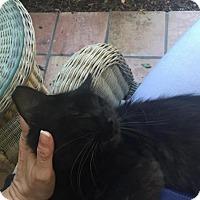 Adopt A Pet :: Mykonos - Sacramento, CA