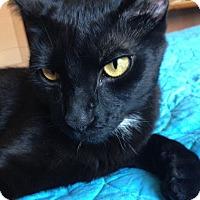 Adopt A Pet :: Ori - Chicago, IL