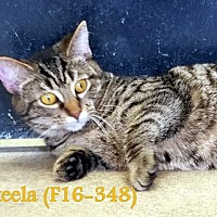 Adopt A Pet :: Akeela - Tiffin, OH