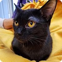 Adopt A Pet :: Estella - Lombard, IL