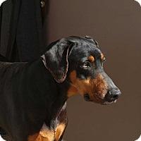 Adopt A Pet :: Piper - Richmond, KY