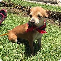 Adopt A Pet :: Mr. Burns - San Leon, TX