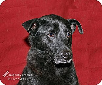 Labrador Retriever Mix Dog for adoption in Graceville, Florida - Jelly I aka Nick
