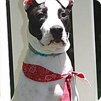 Adopt A Pet :: Georgia - West Bridgewater, MA