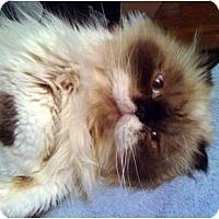 Adopt A Pet :: Giorgio - Columbus, OH