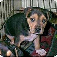 Adopt A Pet :: RUSTY - dewey, AZ