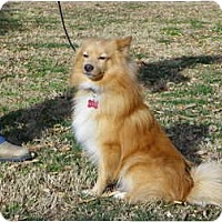 Adopt A Pet :: MURPHY - Hesperus, CO