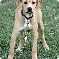 Adopt A Pet :: Carter - Staunton, VA