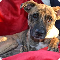 Adopt A Pet :: Millie - Richmond, VA