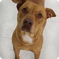 Adopt A Pet :: Caramel - Yukon, OK