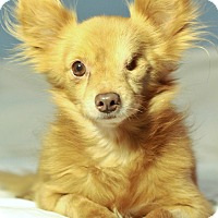 Adopt A Pet :: Fozzie - Romeoville, IL