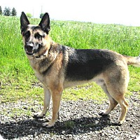 Adopt A Pet :: Max - Pleasant Grove, CA