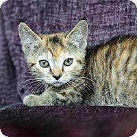 Adopt A Pet :: Tabitha - Ft. Lauderdale, FL