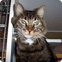 Adopt A Pet :: Cosby - Scottsdale, AZ