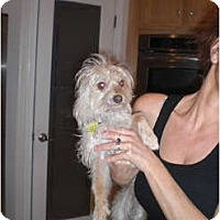 Adopt A Pet :: Tommy - Rescue, CA
