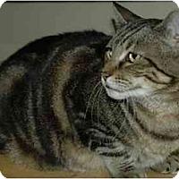 Adopt A Pet :: Big Mama - Pendleton, OR