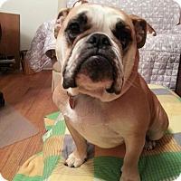Adopt A Pet :: Ozzie - Strongsville, OH