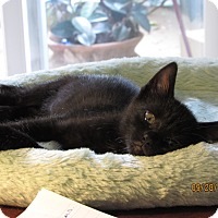 Adopt A Pet :: Bam Bam - Southington, CT