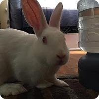 Adopt A Pet :: Jefferson - Williston, FL