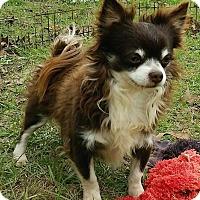 Adopt A Pet :: Chuck - geneva, FL