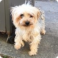 Adopt A Pet :: Wooly - Fairview Heights, IL