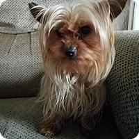Adopt A Pet :: MISHA - Mission Viejo, CA
