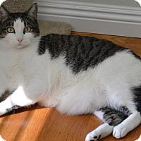 Adopt A Pet :: Cato - Woodland, CA