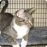 Adopt A Pet :: Cinderella - Deerfield Beach, FL