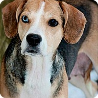 Adopt A Pet :: Jane Austen - Hastings, NY