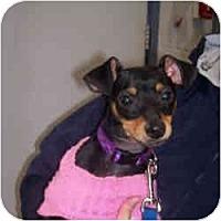 Adopt A Pet :: BELLA - Springvale, ME