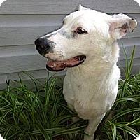 Adopt A Pet :: Billy Bob - video - Glastonbury, CT