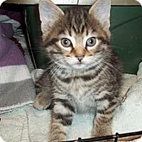 Adopt A Pet :: Itzy - Acme, PA