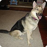 Adopt A Pet :: Dakota - Sterling Hgts, MI