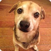 Adopt A Pet :: Newt - Los Angeles, CA