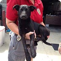 Adopt A Pet :: Sunni - Stamford, CT