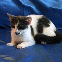 Adopt A Pet :: Bernadette - Sarasota, FL