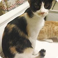 Adopt A Pet :: Bell - North Highlands, CA
