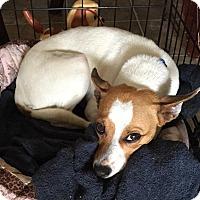 Adopt A Pet :: Nilla - Normandy, TN