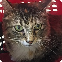 Adopt A Pet :: Jade - Jersey City, NJ
