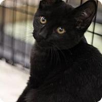 Adopt A Pet :: Honey Bear - Sacramento, CA