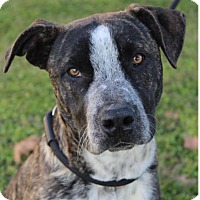 Adopt A Pet :: OSCAR/Low Fees/altered - Red Bluff, CA